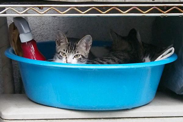 3兄弟で洗面器にイン2