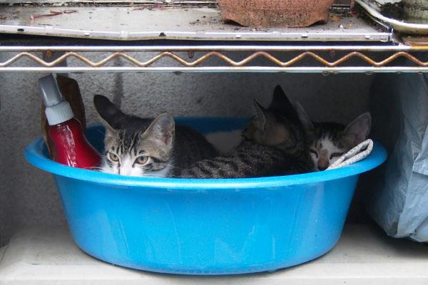 3兄弟で洗面器にイン3