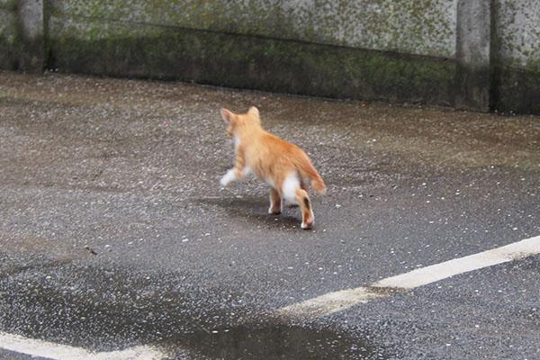 茶白仔猫 逃走