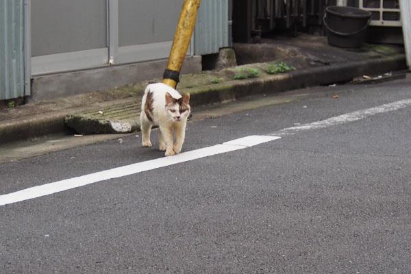 歩く ヤン