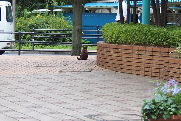猫の背中 アンジュ