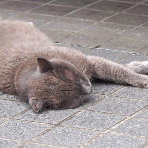 roshigure napping