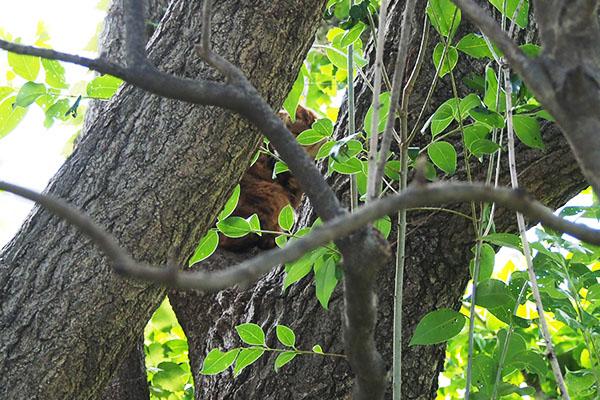木の間にクラタン