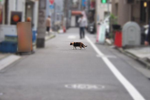 riko cross the road