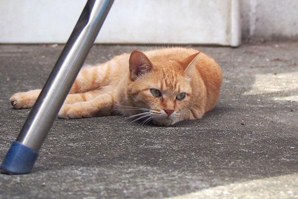 ソラちゃん 仔猫を見てる