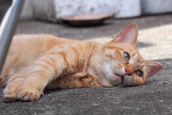 ソラ 仔猫の動きチェック