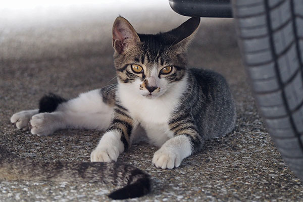 rinx relax under the car