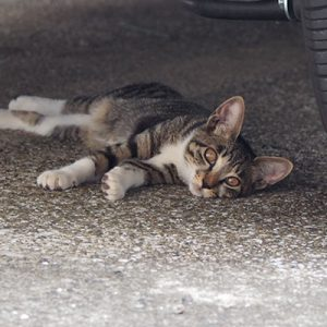 socks relaxing under the car