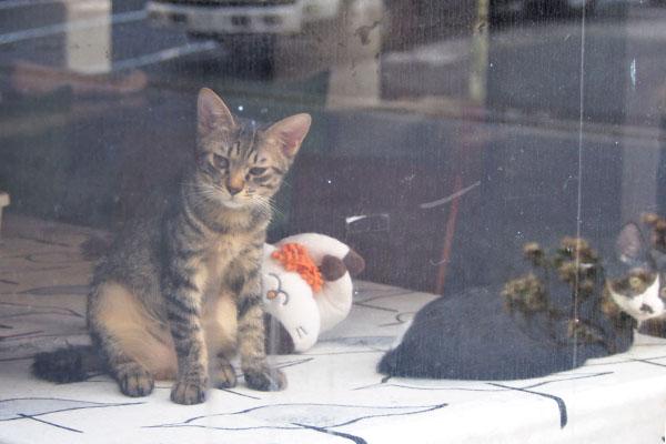 きじとら仔猫 反対側から