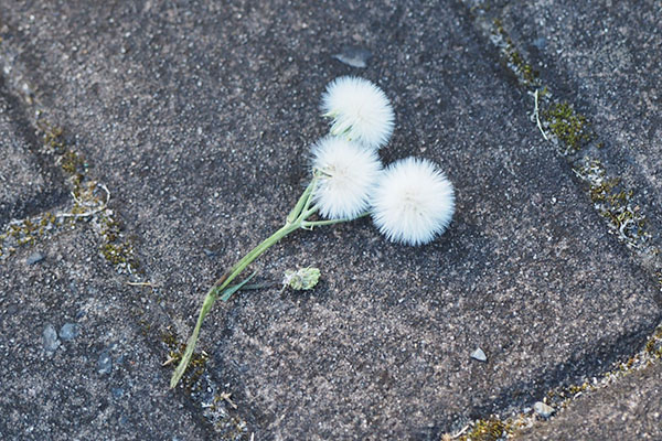 かわいい花 flower white
