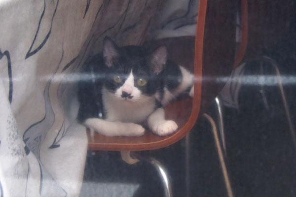 白黒仔猫 椅子の上
