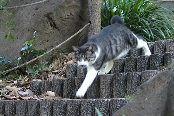 タンタル 階段を駆け下りて来る