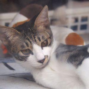 kitten in the room tabby