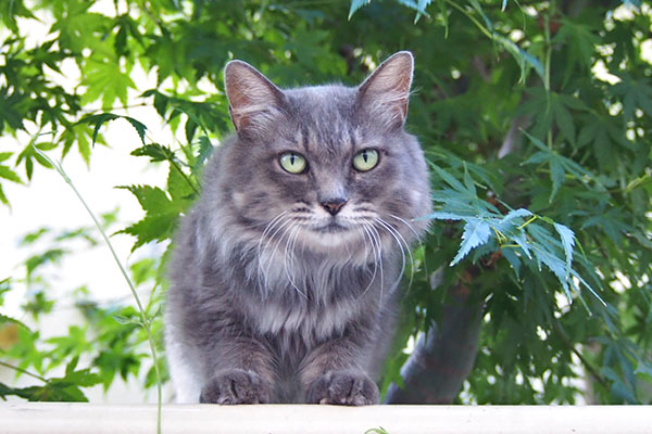 mafu staring on the fence