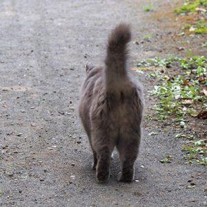 mafu tail on the air