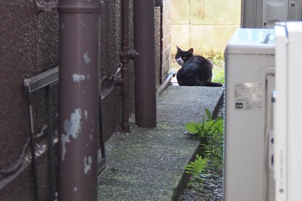 路地に白黒猫 ポチ