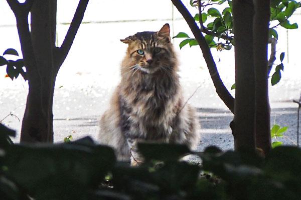 merenge watching me