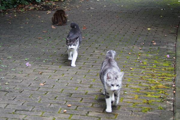 食べ終えて 3猫
