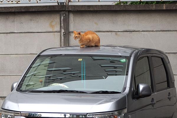 車の屋根にソラちゃん
