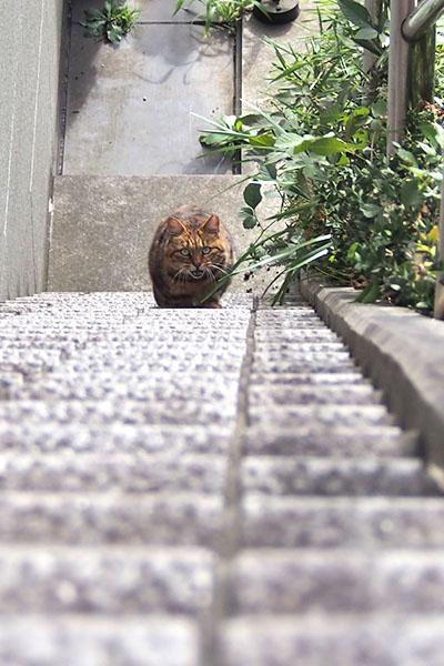 縦 クラタン階段
