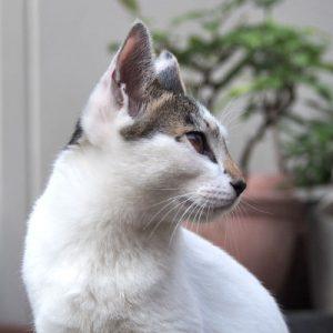 shiromaru profile right