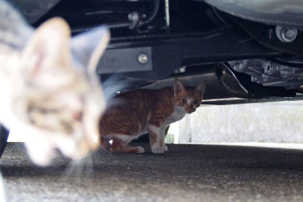 とーま 車の下からこちら見る