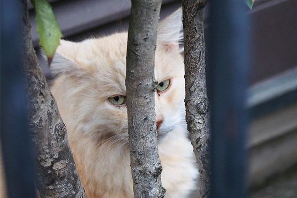 木の間から見る ナリコマ君