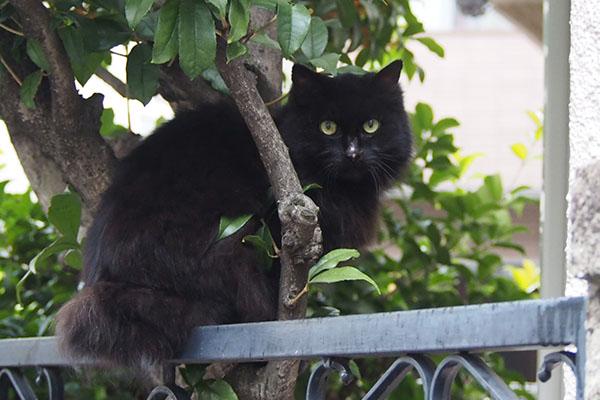 harima on the fence