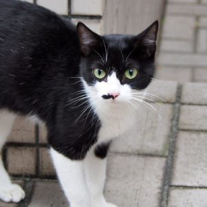 komachi face cute eyes