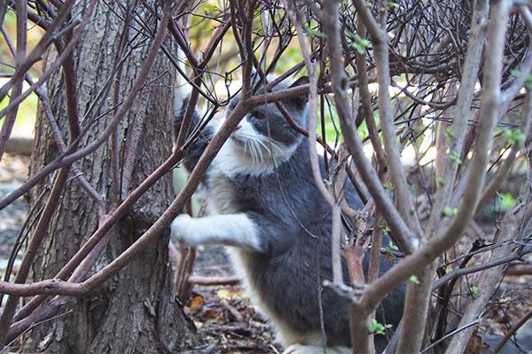 オット 木に引っ掛かる