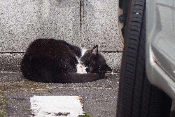 sleeping Kote
