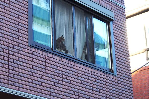 窓辺の猫さん むぎわらにゃんこ