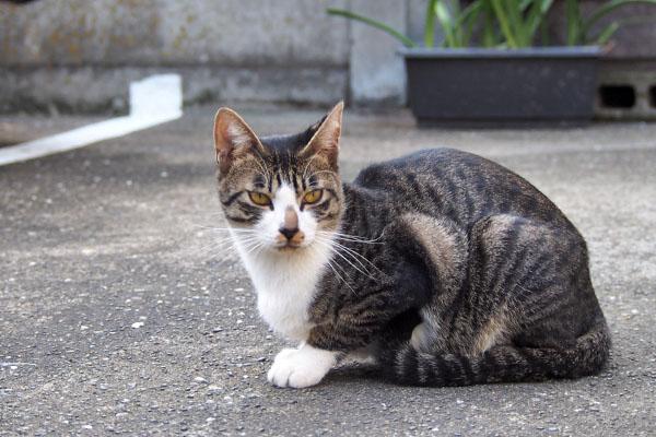 ホット 他の猫を見てる