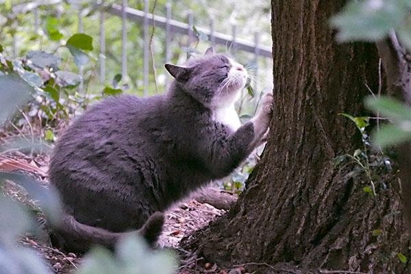 オット 木に前足を掛ける