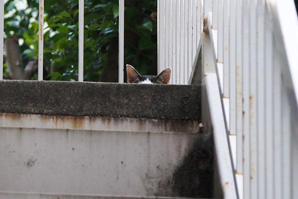 テン 階段上にお耳