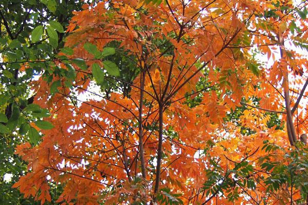 winter leaves flower orange
