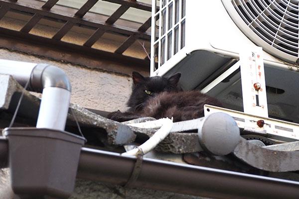 ハリマは屋根の上に