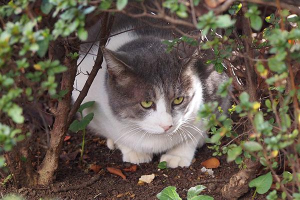 ダル太 木の下に隠れる