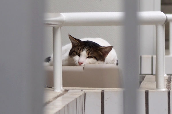 roof_napping