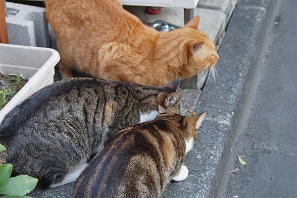 3猫揃って トトは確認