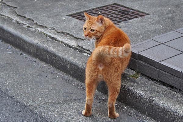 cub sexy posture