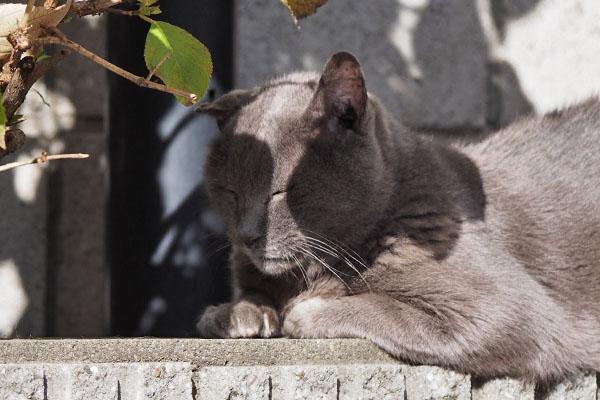 roshigure napping in the sunshine