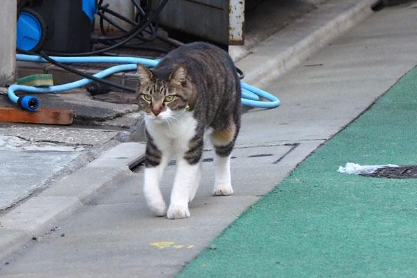 リオ ゆっくりと歩く
