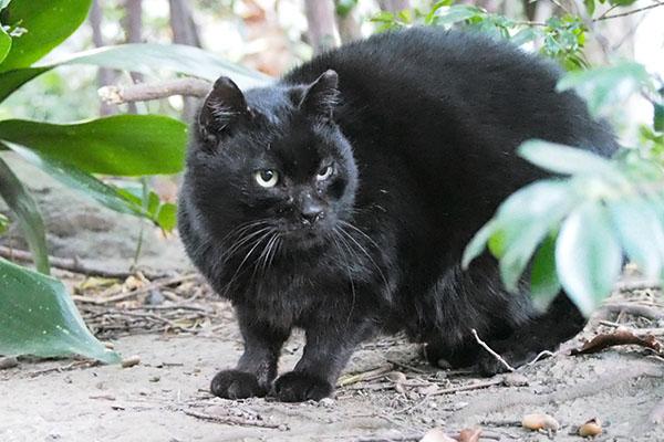 他の猫を見てるクーロン