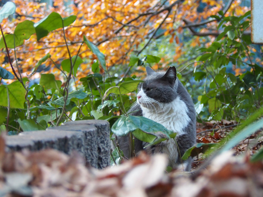 otto profile with yellow leaves