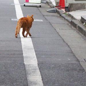 cub walking