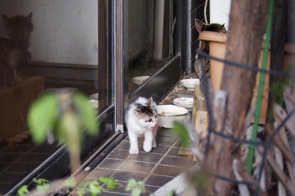 仔猫見えた
