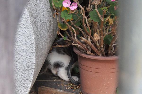 セイ 仔猫の足