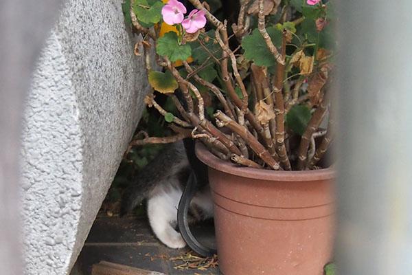 セイ 仔猫の足2