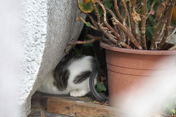 セイ 仔猫の足3